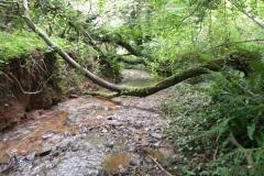26. Upstream from Bilbrook