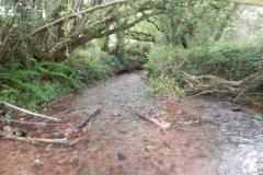 33. Upstream from Bilbrook