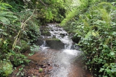 7. Downstream from ROW Bridge 4641  (11)