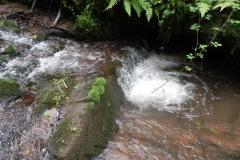 7. Downstream from ROW Bridge 4641  (12)