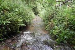 7. Downstream from ROW Bridge 4641  (13)